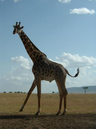 Kenya Trip 1 026