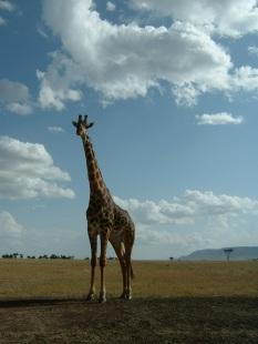 Kenya Trip 1 027